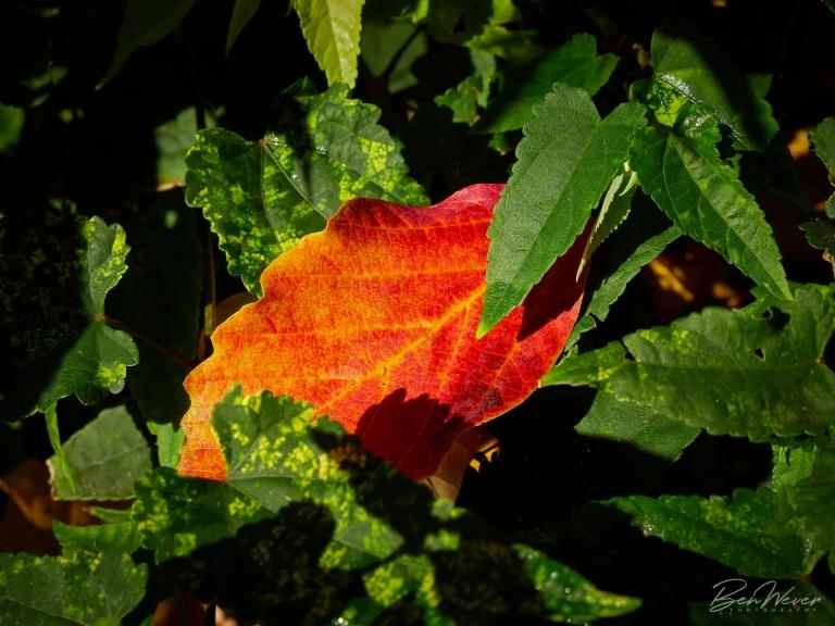 Ben Wever Photography Camellia Gardens Portfolio